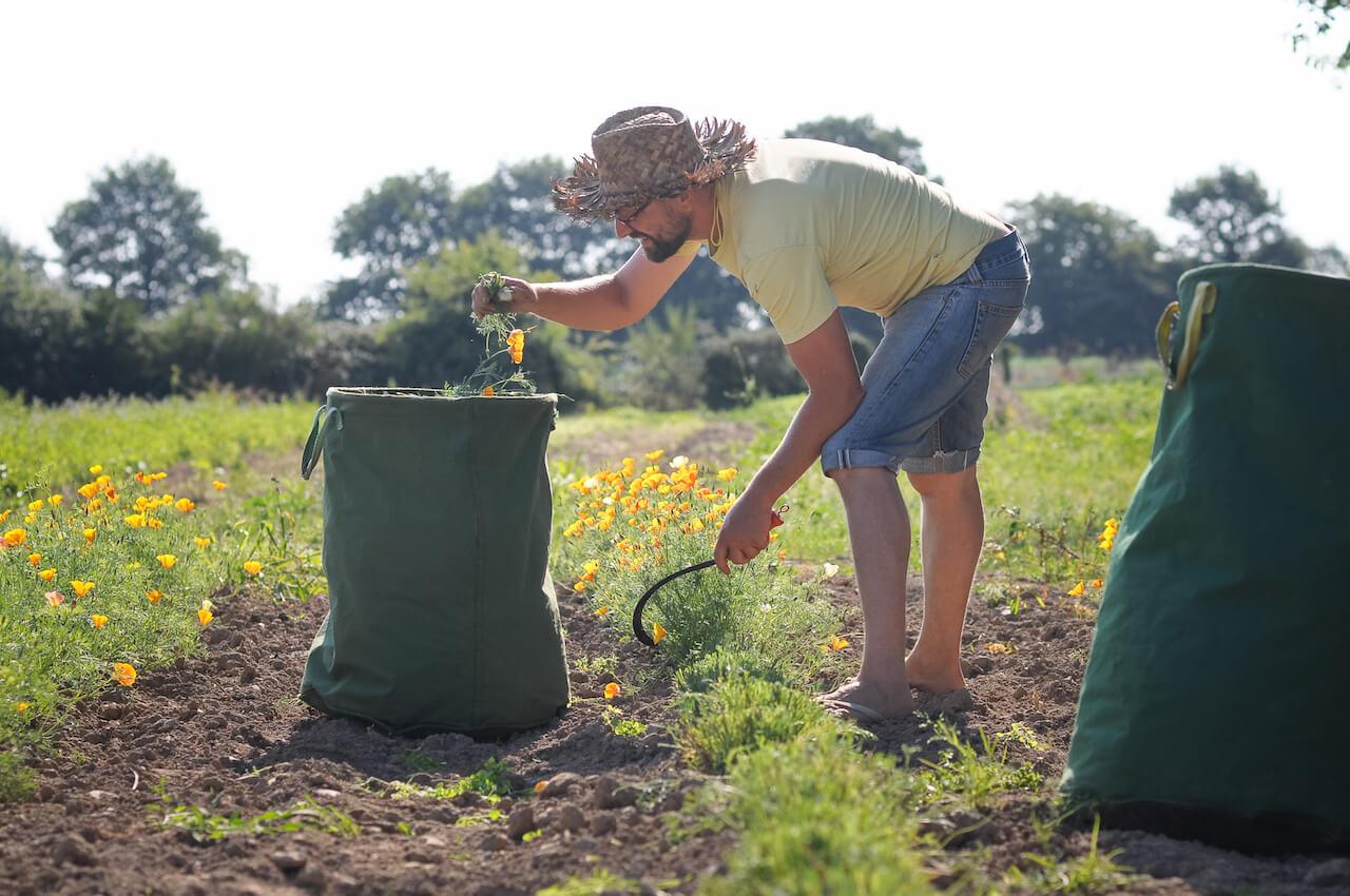 Le champ de l'air Pavot récolte
